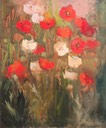 282 Red and white poppies    Deacon SA BCY0205